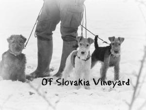 Of Slovakia Vineyard