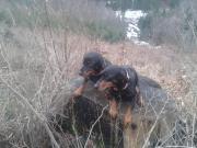 Pred dvomi dňami nám zabehli dve suky slovenského kopova
