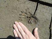 Aké zviera zanechalo túto stopu? - diskusia