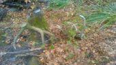 trojkilové zelenáče