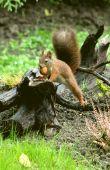 veveričí rozkrok