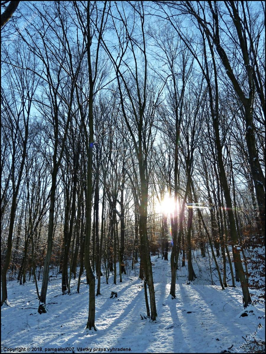 fc4db47b5067 v hore ... - poľovnícka fotografia
