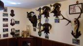 Kúsok našej poľovníckej izby ,,Rohatý kút