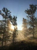 Krasne rano...