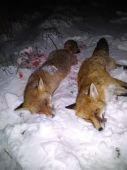 Líška a lišiak