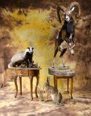 Jazvec,zajac, muflon