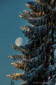 Mesiac sedí na strome ...........