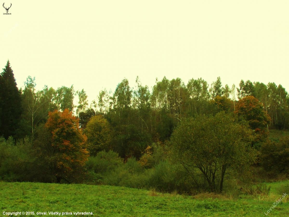 7ff12cb53 Jesená... - poľovnícka fotografia, fotka, poľovnícke foto #278349 ...