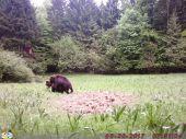 Medvedia láska