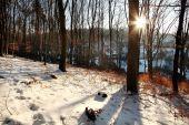 potulka v lese