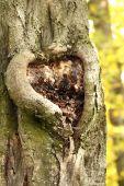 srdce na kmeni