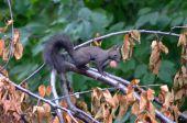 pracovitá veverička