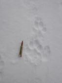 stopy vlka