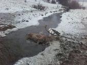 V potoku
