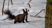 Veverička pre radosť.