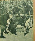 Magyar vadász