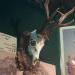 Pravidelný osmorák