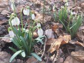 U nás už je jar