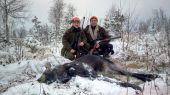 Lov na losy a tetrovy vo Švédsku