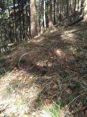 Co vsetko sa da najst v Tom lese