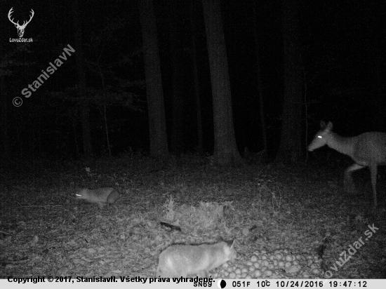 jelenica a lišky