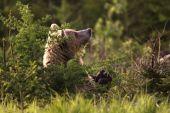 Aj medveď sa modlíí ..
