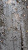 Medvedie stopy v Podpoľaní