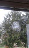 Sova nám nabúrala do školského okna
