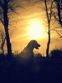 V západe slnka