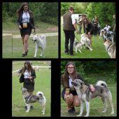 16.ročník výstavy poľovných psov v Sielnici