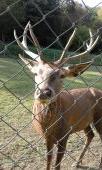 Jelenček v zajatí plotu