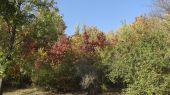 Fantazie barvy podzimu