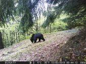 Medvedia ruja