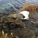 Lebka na břehu..... kdo pozná?