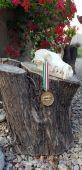 Zlatá z maďarska