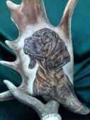 Motiv na daňčí lopatě - Bavorský barvář (štěně)