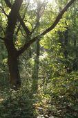 V tieni stromov a na výslní