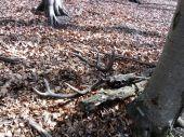 Môj prvý úhyn jeleňa