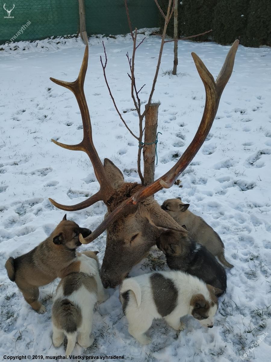 9f489e245 Učíme omladinu na pachy - poľovnícka fotografia, fotka, poľovnícke ...