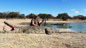 Lov veľkého krokodíla v Afrike