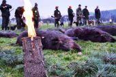 ulovenie diviaka na spoločnej poľovačke 2
