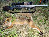 Zaklady vabenia- Nova vabnička Fox One Red Down