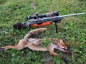 Úspešne ráno s Nordic Predator