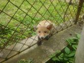 Malý väzeň
