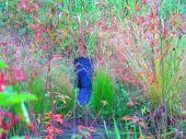 Bobor v tráve...