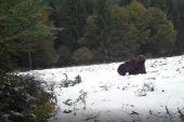 Medvedie radovánky