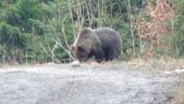 Stretko s medvedom...