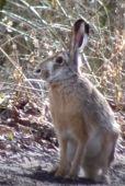 stretnutie so zajacom pri Fialkovej doline