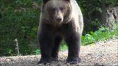 Krajina medveďov