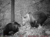 Medvede spolu na solisku